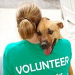 A volunteer gives comfort at an animal rescue shelter.